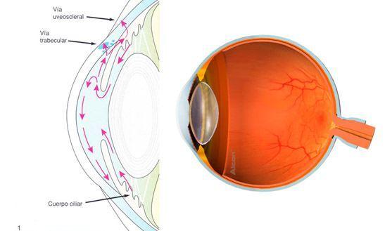 Centro Oftalmológico Carballiño globo ocular