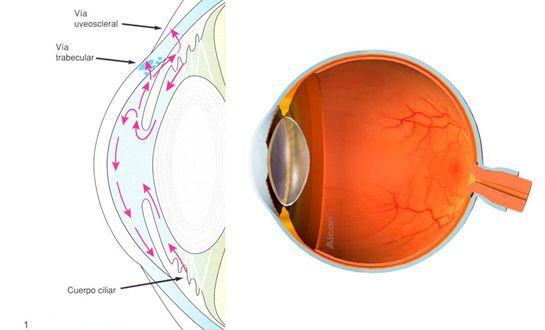Tratamientos enfermedades oculares.